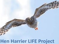 RSPB Hen Harrier 'LIFE' Project confirms appalling extent of illegal persecution